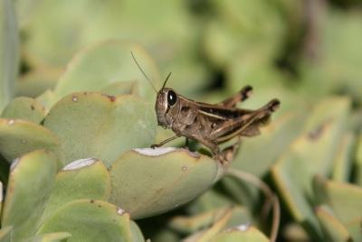 130304_locust